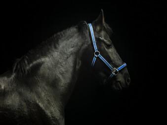 horse-adv